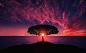 beautiful natural landscape with a tree at sunrise